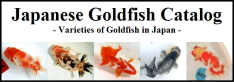 japanese Goldfish Catalog